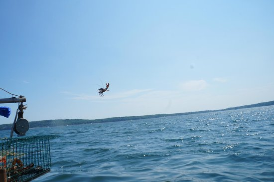 Captain Jack Lobster Boat Adventure : Throwing the small ones back