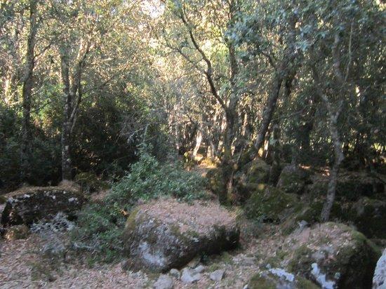 Giara di Gesturi - Escursioni a Cavallo: bosco