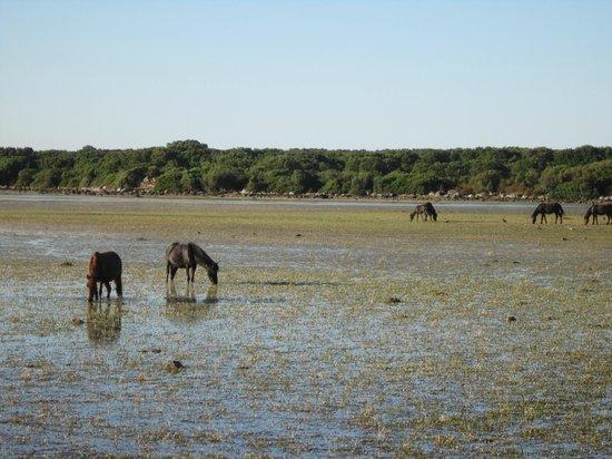 Giara di Gesturi - Escursioni a Cavallo: cavallini