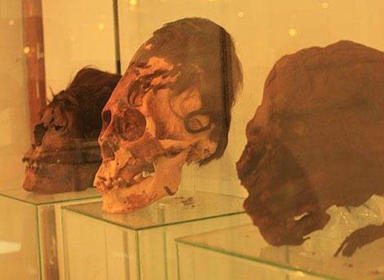 Paracas History Museum -  Juan Navarro Hierro: cabeças largas
