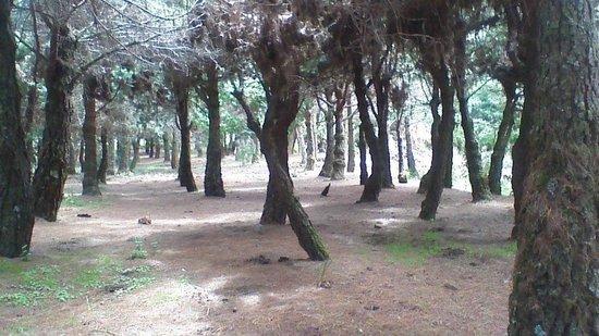 Ecopark Silvan: silvan