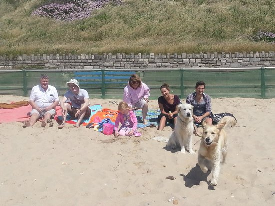 Southbourne Beach Dog Friendly
