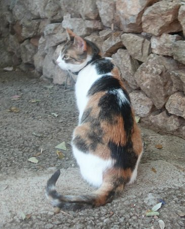 Coves de Campanet : one of the many cats
