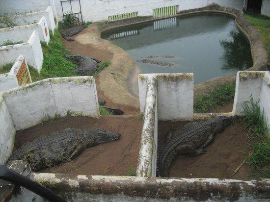 Crocodile Creek : Especies mas grandes