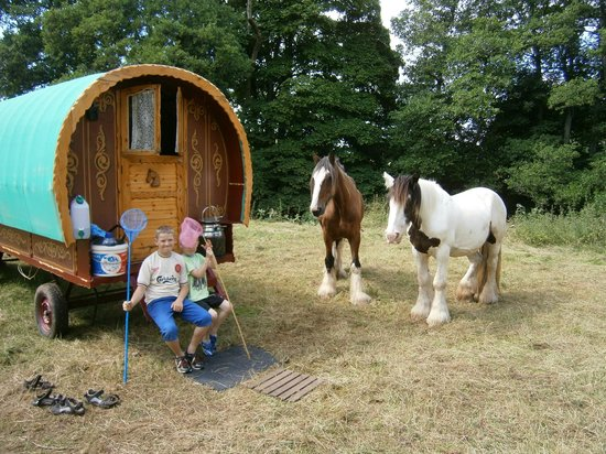 Wanderlusts Gypsy Caravans: Bob and Charlie looking for some attention from our sons