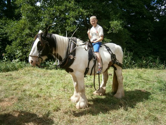 Wanderlusts Gypsy Caravans: Our eldest riding Charlie