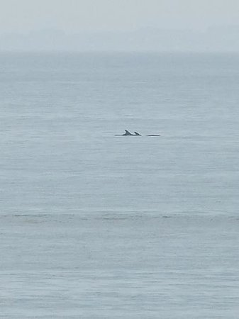 Parkdean - Nairn Lochloy Holiday Park : dolphins right beside site :)