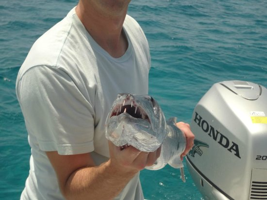 Coco Plum Island Resort : barracuda have ugly teeth!