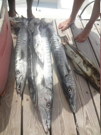 Coco Plum Island Resort : a few of the barracuda we caught