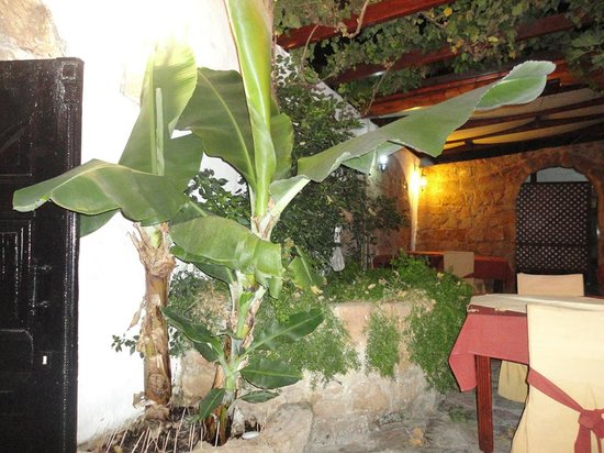 Empire Of The Sun (Chinese and Thai) : inside the beautiful restaurant! you can find bananas and chili there...