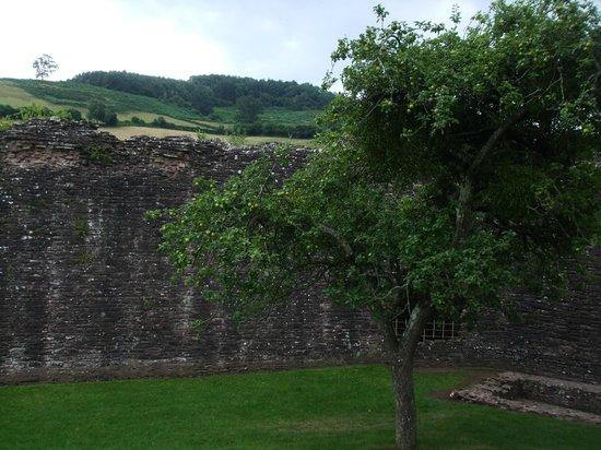 Skenfrith Castle: The apple tree