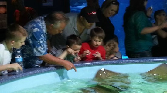 Wildlife World Zoo and Aquarium: Touching the Stingrays