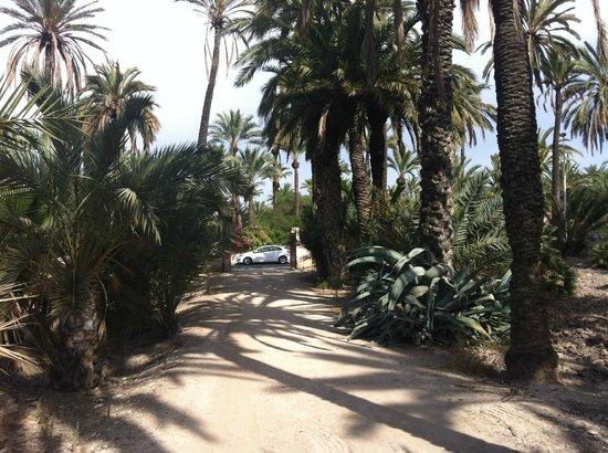 Jardin Milenio: Frente al hotel