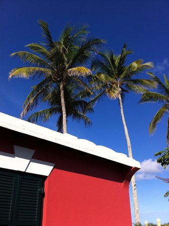 Wade's Garden Inn: Palms swaying on tropical breezes