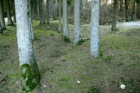Mort-Homme: Pine Trees and Shell Holes, Cote 304