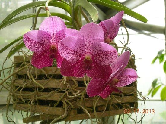 Eureka Springs Park: Orchids