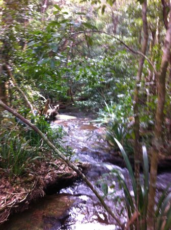 The Mouses House Rainforest Retreat: a wander down the path ...