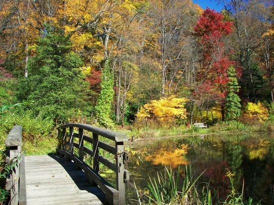 Leonard J. Buck Garden: Bridge