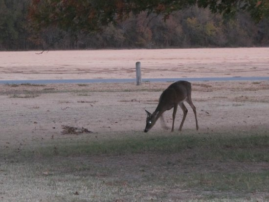 Mohawk Park: Deer are often seen in the evening just before dark