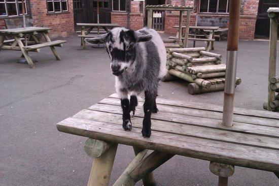 Rays Farm: Cheeky Bertie!