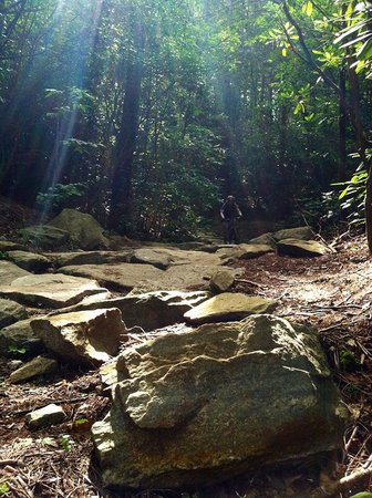 Pisgah Mountain Bike Adventures - Day Tours: Dupont State Recreational Forest