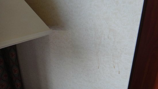 Quality Inn and Suites North/Polaris: Stained Wall