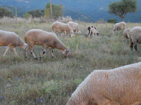 Agriturismo Santa Maria: Baaaaa