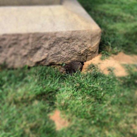 Antietam National Battlefield: Groundhog
