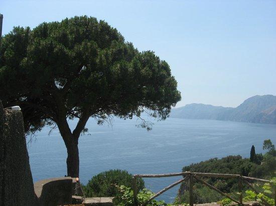 Hotel Il Pino: the pine tree