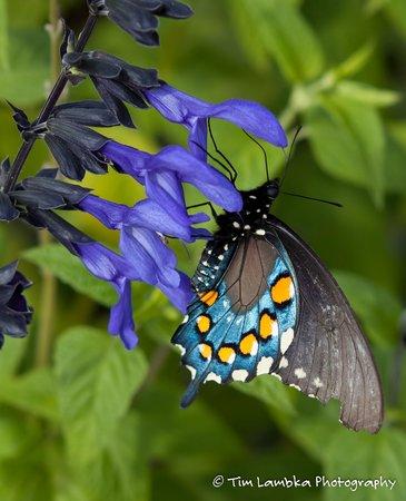 Ridges Resort & Marina: Butterfly in the garden