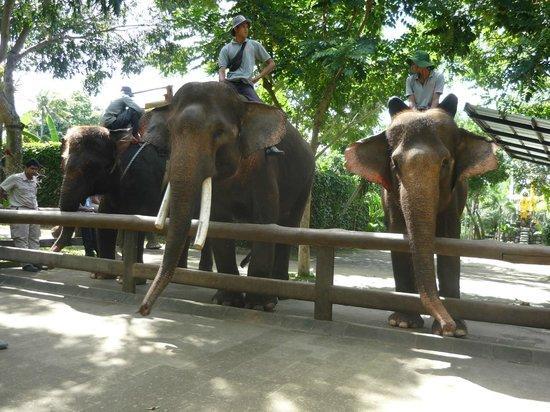 Clean cage - Picture of Bali Zoo, Sukawati - TripAdvisor