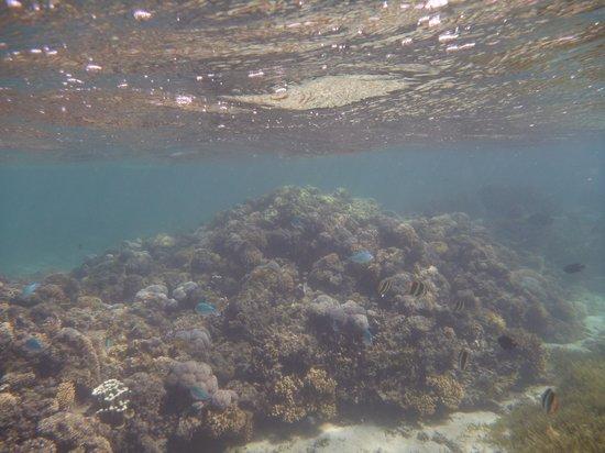 Marine Adventures : more snorkelling