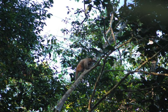 Tapiche Reserve: Ant Eater