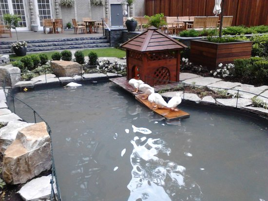 Backyard Duck Ponds the ritz's duck pond - picture of maison boulud, montreal - tripadvisor