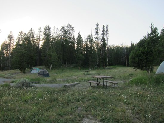 Bridge Bay Campground : Loop C site 143