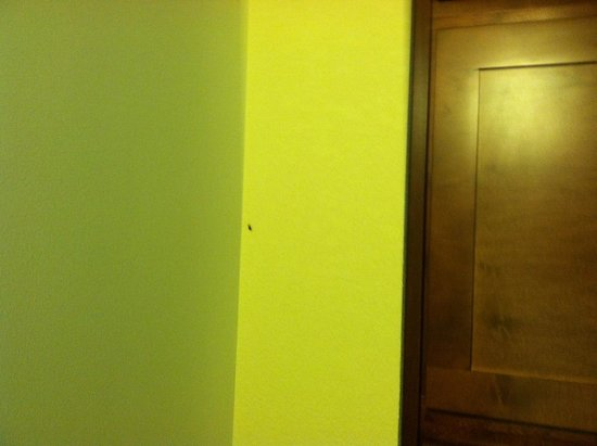 Aqua Beach Inn : Roach above cabinet