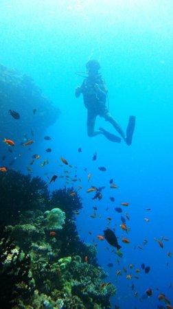 Diving in Banana reef (April 2013)