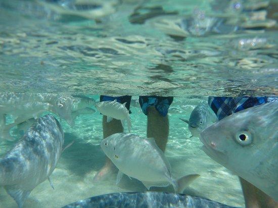Ned's Beach : fish swimming around my boys' legs