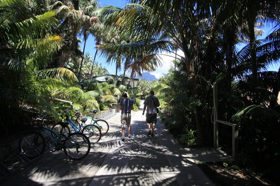 Leanda-Lei Apartments: driveway leading to office, hire bikes & Mt Gower in background
