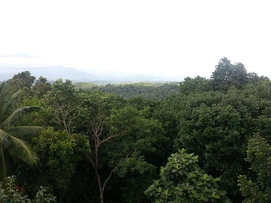 Delma Mount View Hotel: View