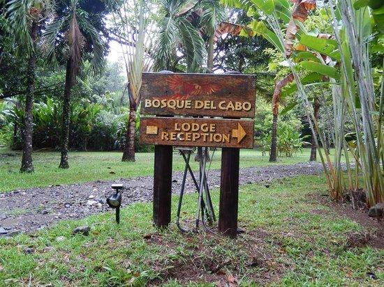 Bosque del Cabo Rainforest Lodge: Property.