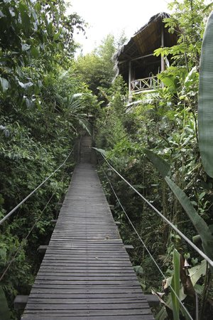Terrabambu Restaurant Lodge: suspension bridge at Terrabambu