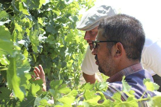 Azienda Agricola Leuta: The Grapes