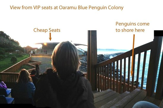 Oamaru Blue Penguin Colony: View from VIP seats