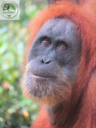 EcoTravel Bukit Lawang - Day Tours
