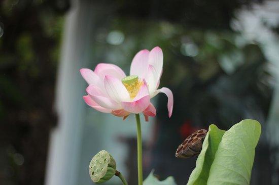 Kamar Kamar Rumah Tamu: lotus flower