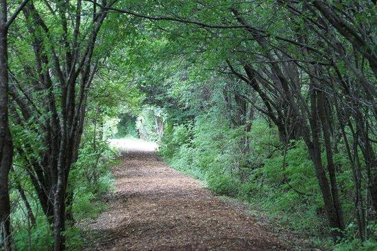 Cornell Lab of Ornithology: trail
