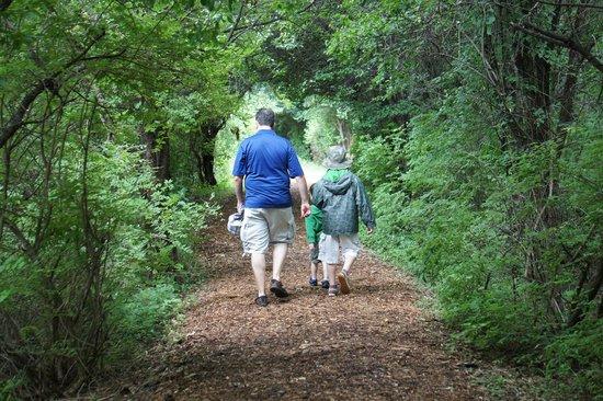Sapsucker Woods: trail