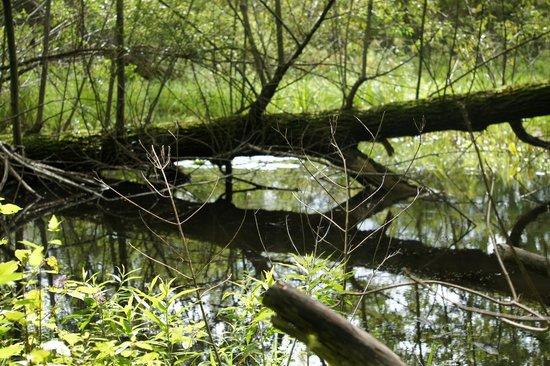 Cornell Lab of Ornithology: Fallen tree
