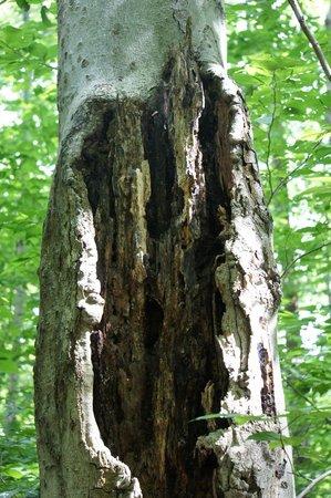 Cornell Lab of Ornithology: tree